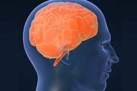 brain_280x186.jpg